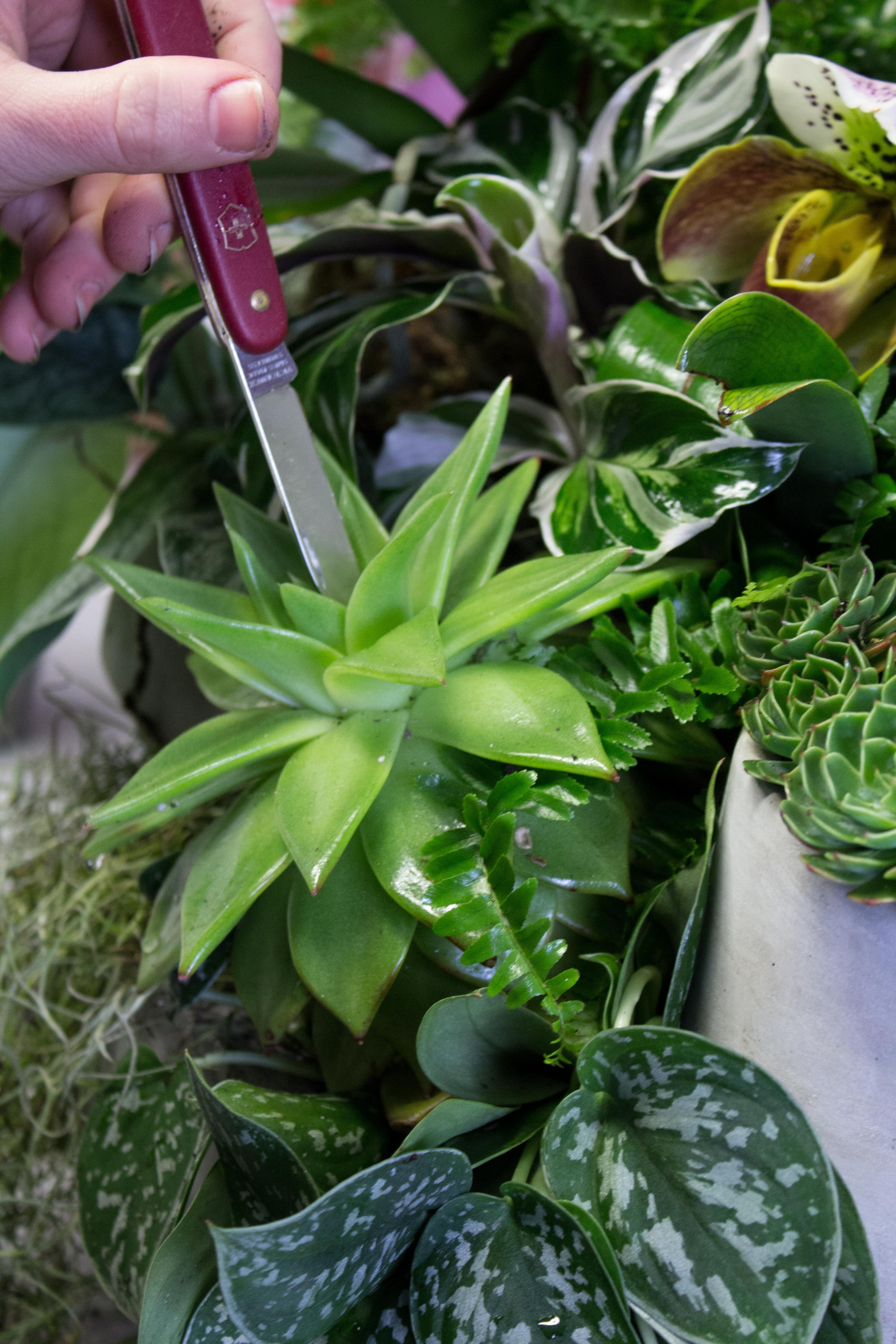 green natural floral design.jpg