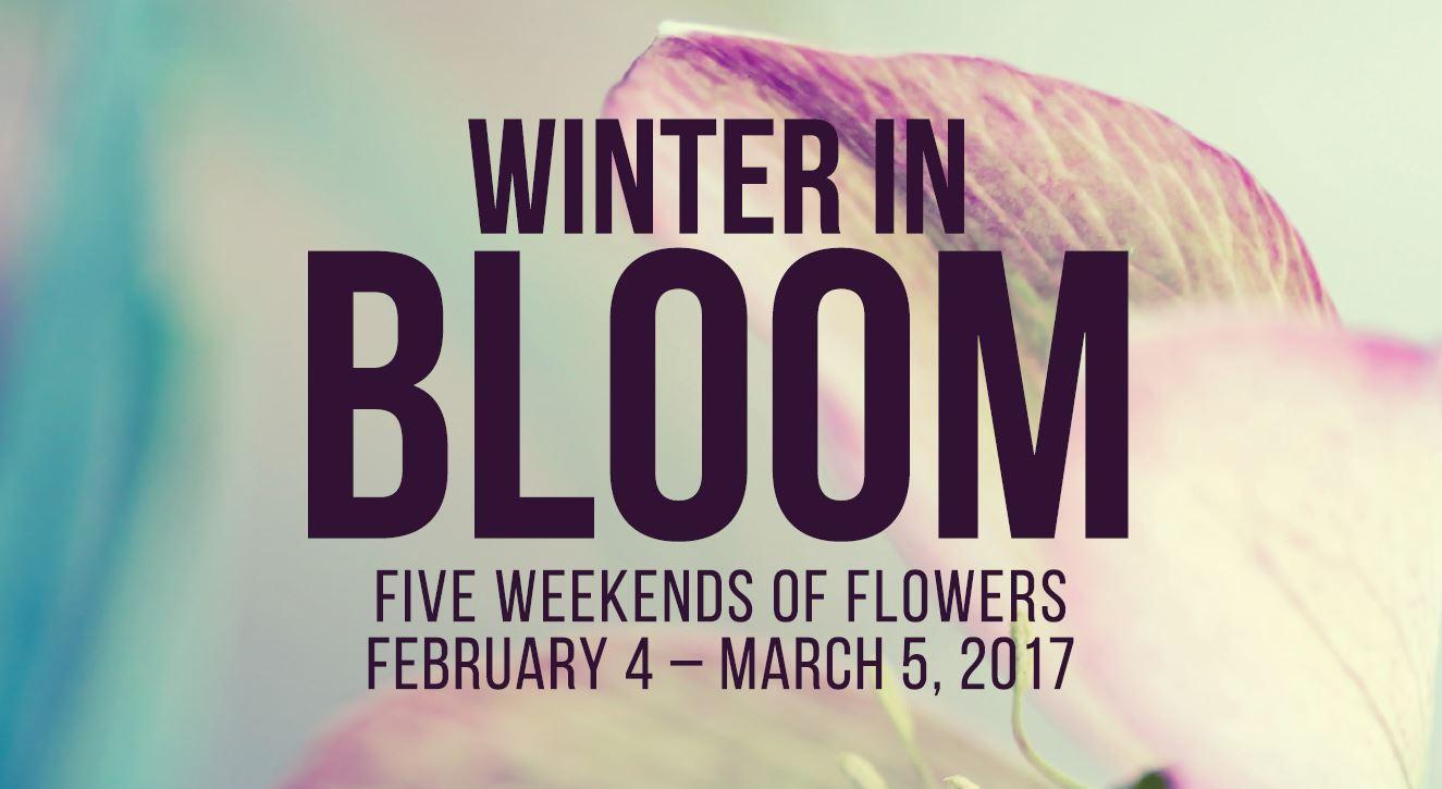 winter in bloom.jpg