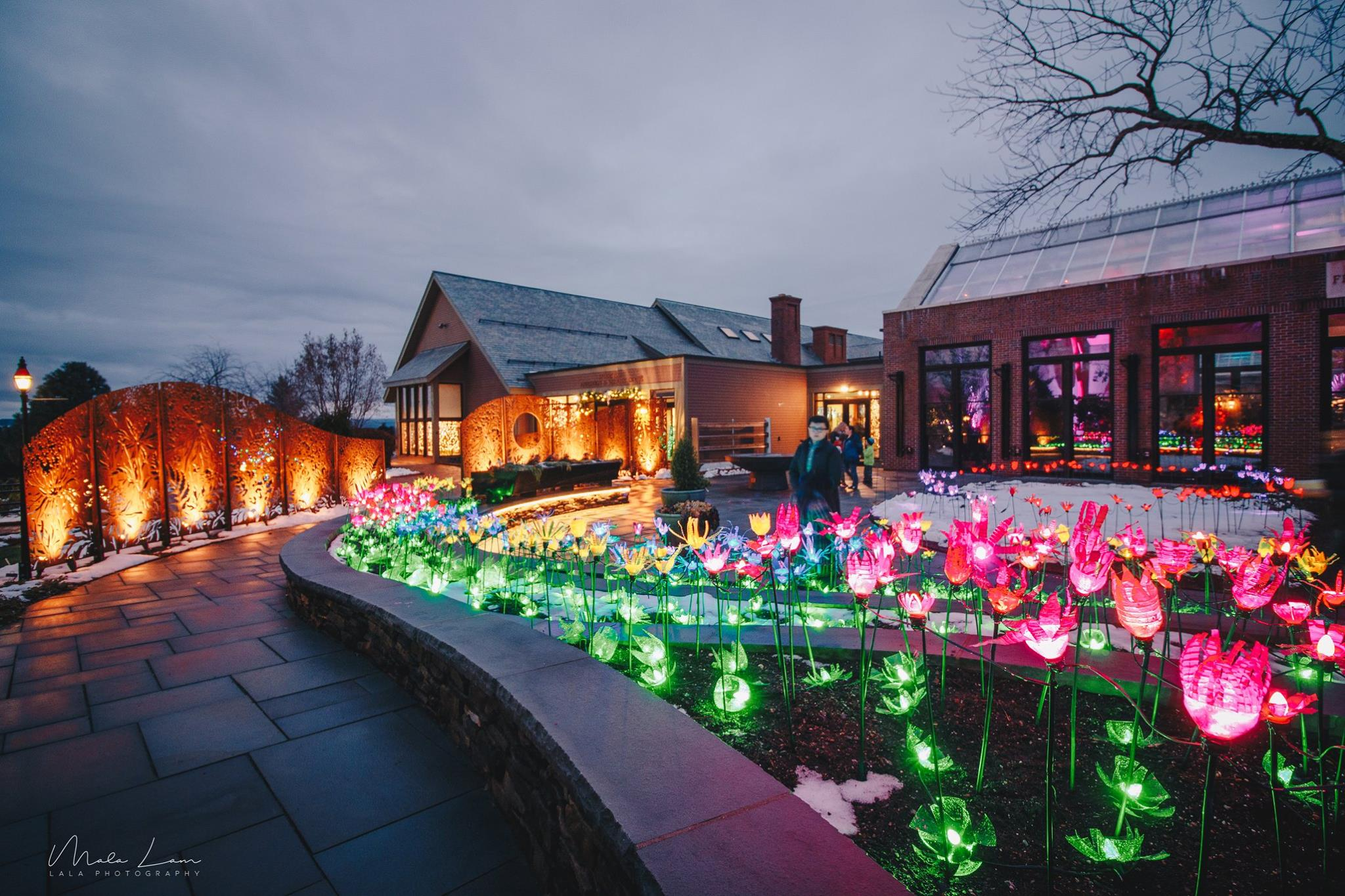 night lights at tower hill botanic garden